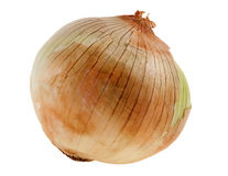 Onion Dry Skin Royalty Free Stock Images