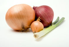 Onion Family Royalty Free Stock Photos