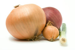 Onion Family Royalty Free Stock Photo