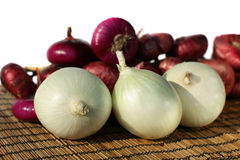 Onion Family Stock Photo