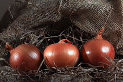 Onion farm burlap agriculturalagriculture animal background Royalty Free Stock Image