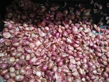 Red onion that looks healthy and safe for consumption stock images