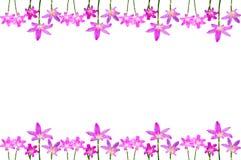 Onion flower Royalty Free Stock Photos