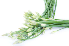 Onion flower isolated on white background Royalty Free Stock Image
