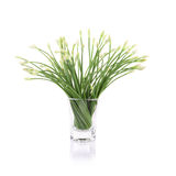 Onion flower isolated on white background Stock Photography