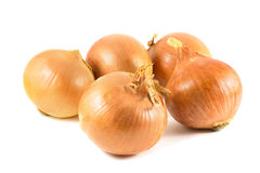 Onion. Fresh onion bulbs isolated on a white background royalty free stock photos