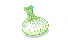 Onion. Fresh, vegetables, simple illustration Royalty Free Stock Photography
