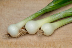 Onion. Fresh young onion on cutting board stock images
