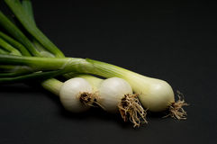 Onion. Fresh young onion on cutting board stock image