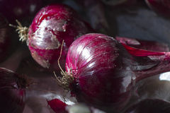 Onion in garden. Harvesting of red onion and drying it in the room Stock Image