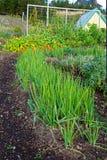Onion Garden Stock Photos