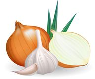 Onion and garlic. Royalty Free Stock Photo