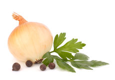 Onion and garlic clove Royalty Free Stock Image