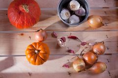 Onion, garlic and pumpkins Stock Images