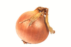 Onion. Gold onion isolated on a white background. Horizontal position royalty free stock image