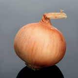 Onion on gray background. Royalty Free Stock Images