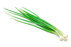 Onion Green Royalty Free Stock Images