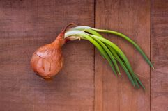 Onion with the greens stock photos