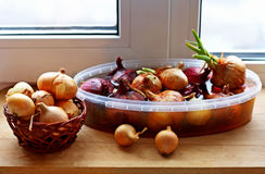 Onion growing on the window sill. Stock Photo