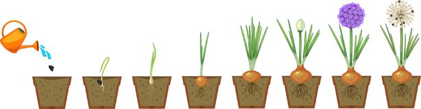 Plant Growth Stages Stock Illustrations - 633 Plant Growth ...