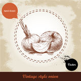 Onion hand drawn illustration. Vintage retro background with hand drawn sketch onions. Stock Photo
