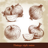 Onion hand drawn set. Herbs and spices vector illustration Stock Photos