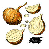 Onion hand drawn vector set. Full, half and cutout slice.  Vegetable artistic style object. Stock Photo