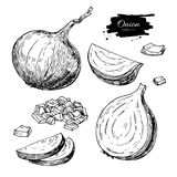 Onion hand drawn vector set. Full, half and cutout slice.  Vegetable engraved style object Royalty Free Stock Photography