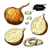 Onion hand drawn vector set. Full, rings and Half cutout slice. Isolated Vegetable artistic Royalty Free Stock Images