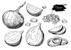 Onion hand drawn vector set. Full, rings and Half cutout slice. Isolated Vegetable engraved style Stock Photo