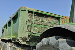 Onion harvest loaded in semi trailer Royalty Free Stock Photography