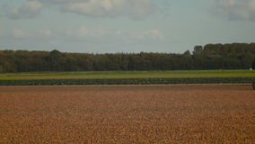 Onion Harvesting stock footage