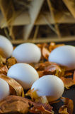 Onion husks and eggs Royalty Free Stock Photos