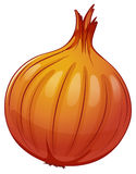 An onion Stock Photography