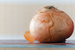 Onion. Ingredients in wood table Stock Photos
