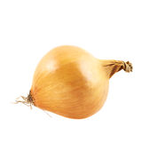 Onion isolated royalty free stock photo