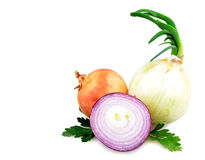 Onion isolated Stock Photography