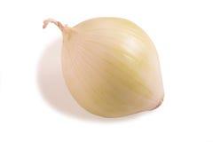 Onion isolated on white background. Stock Image
