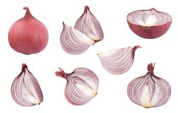 Onion Isolated on white. Onion half collection Isolated on white background stock photos