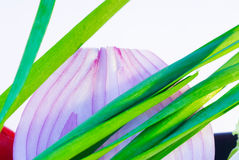 Onion and leeks. Fresh onion and leeks  extreme close up over white Royalty Free Stock Images