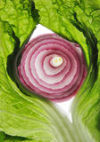 Onion and lettuce Stock Photography