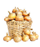 Onion lie in a basket Royalty Free Stock Images
