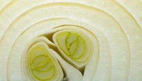 Onion macro Royalty Free Stock Images