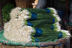 Onion. In the market bangkok Royalty Free Stock Image
