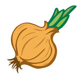 Onion.  object. Vector illustrations. Stock Image