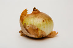 Onion on off-white background Royalty Free Stock Image