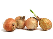 Onion Over White Stock Image