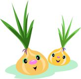 Onion Pair Stock Image