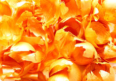 Onion peel. Onion peel - a bright, original texture Stock Images