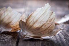 Onion peel on wood. Royalty Free Stock Photos